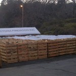Pallets of Victoria Firewood